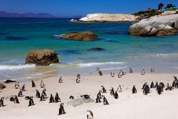 4404_370x246_penguin-paradise.jpg