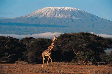 By melting snows of Kilimanjaro