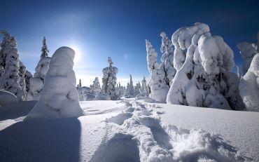 Snowy Lapland